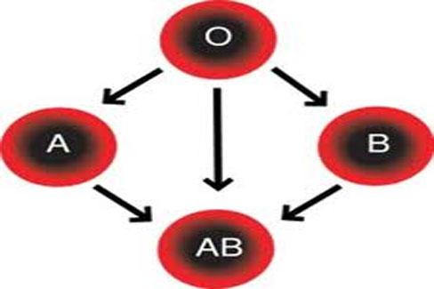 специфика 4 группы крови