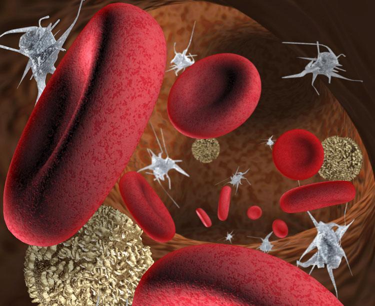 тромбоциты и их параметры