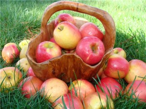 Яблоки - полезный продукт для крови