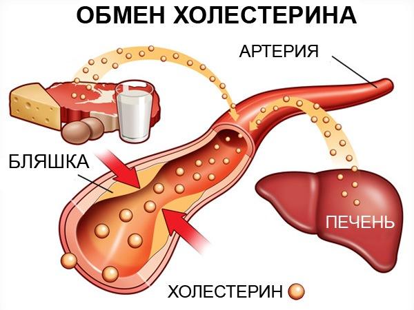 Механизм образования холестерина