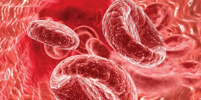 Крупные красные кровяные тельца