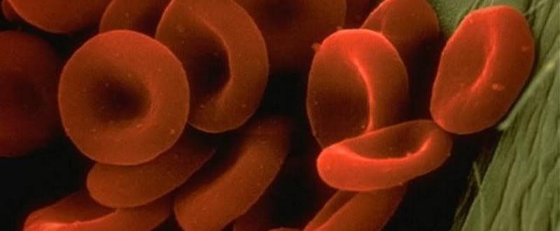 Красные тельца в крови