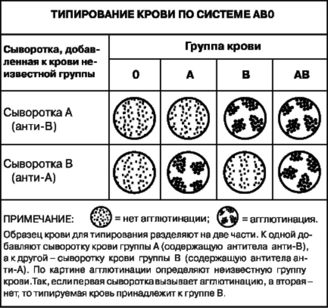 Таблица типирования по системе АВО