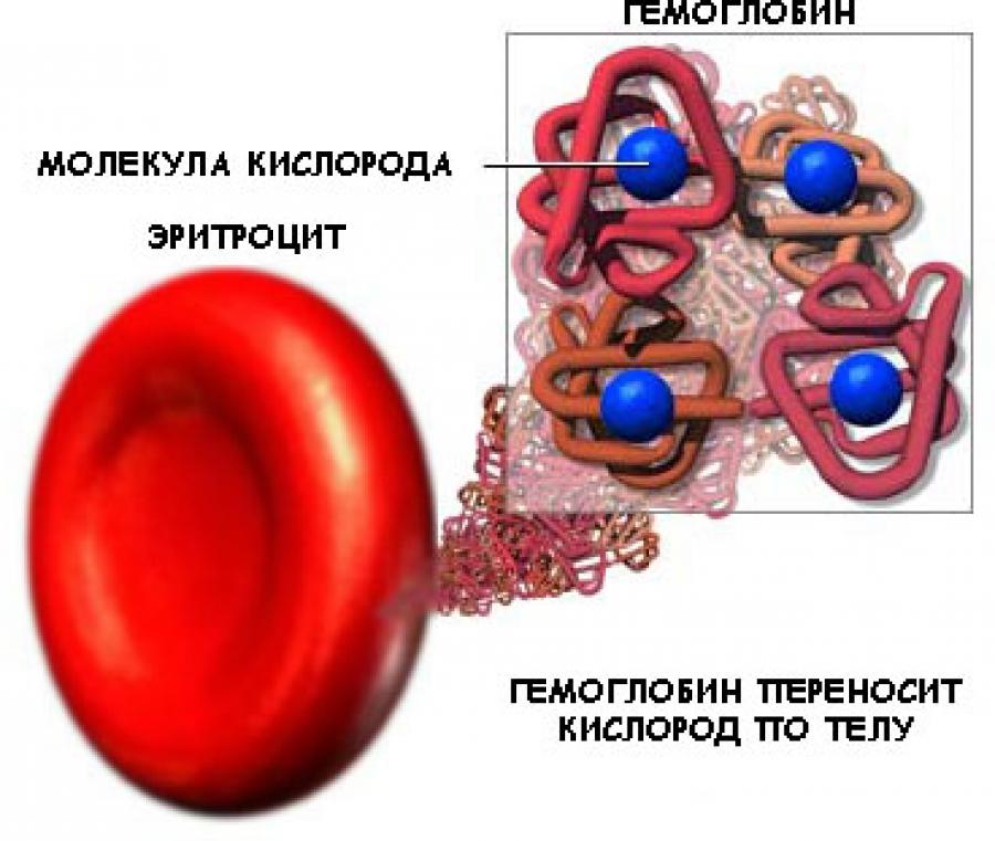 схема - гемоглобин переносит