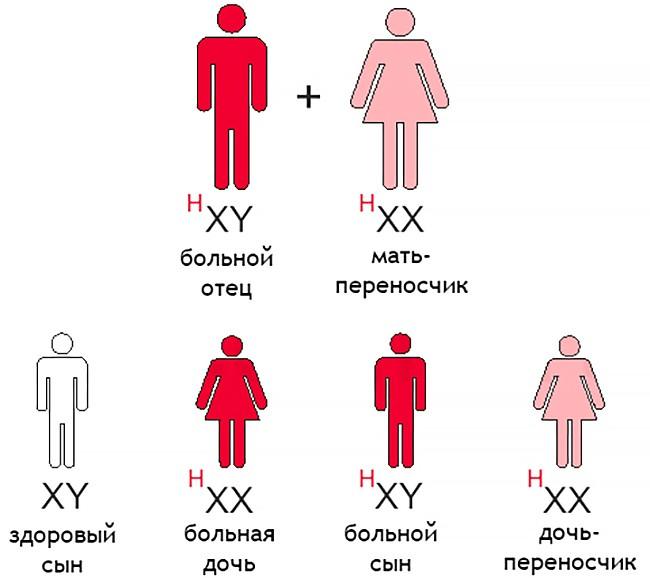 Гемофилия и наследственность