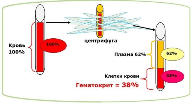 Схема определения гематокрита