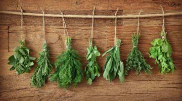 Травы для разжижения крови и укрепления сосудов — как излечить болезнь, не навредив себе