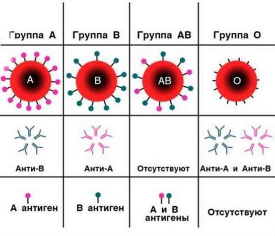Группы крови по системе AB0