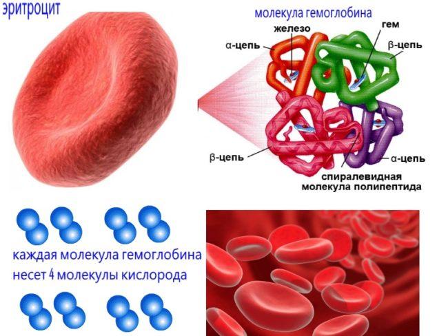 Причины повышения билирубина в крови