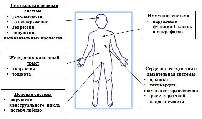 схематически показан человек и основные системы